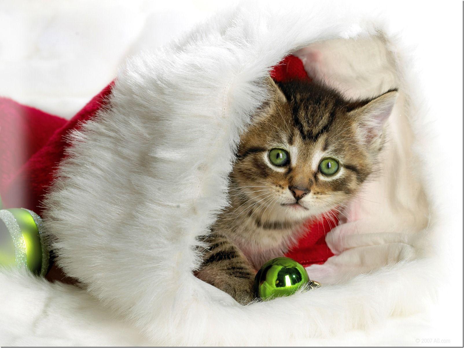 Mensagens de Feliz Natal para enviar por e-mail