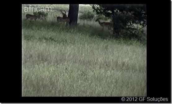 africa em webcam