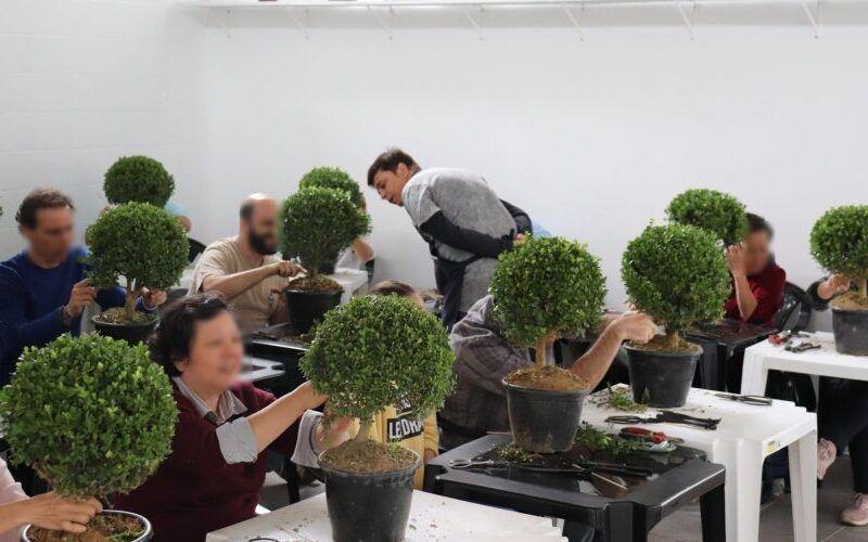 Saiba como fazer mudas de bonsai e começar agora seu cultivo 3