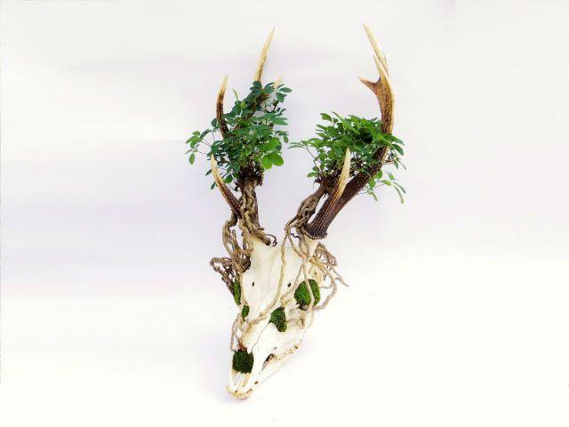 Tokyo Bonsai Lifestyle cria arte Dark plantando bonsai em crânio de animais 5